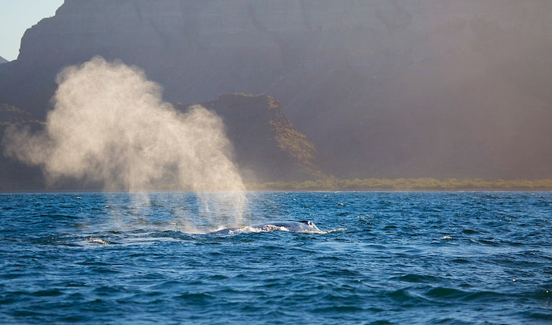 Whale Watching Excursions in Loreto Baja California