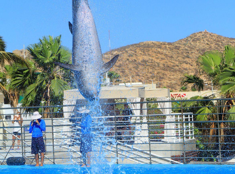 Signature Dolphin Swim